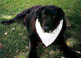 image-291389-brutus_before_adoption.jpg