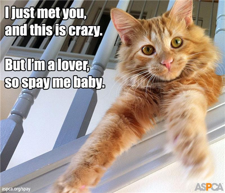 image-556181-spay-cat.w640.png